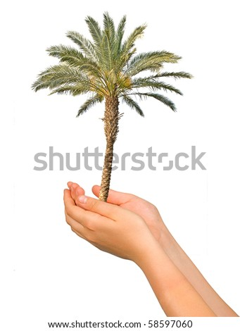 palm tree in hands as a symbol of nature protection - stock photo