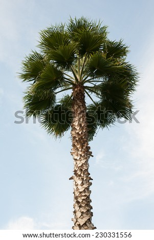 Palm Tree in Summer - stock photo