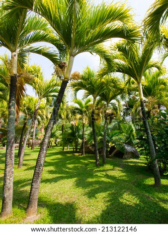 Palm tree in tropical garden  - stock photo