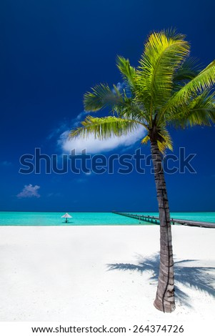 Palm tree in tropical perfect beach at Maldives with jetty in distance - stock photo