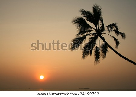 Palm-tree is contemplated by sunset - stock photo