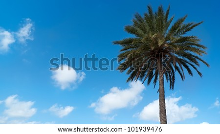 Palm tree isolated on blue sky with clouds on a beach in Murcia