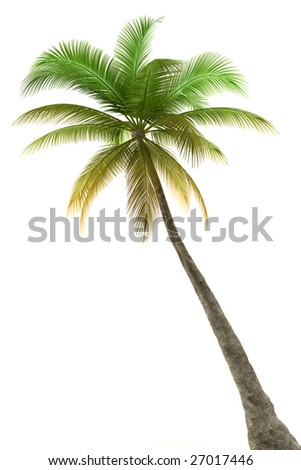 Palm tree isolated on white background with clipping path - stock photo