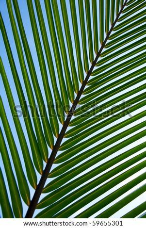 Palm Tree Leaf Background! - stock photo