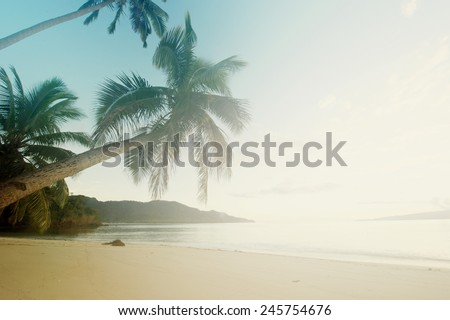 Palm tree leans towards the Pacific Ocean in tropical paradise. - stock photo