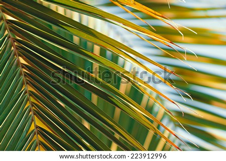 Palm tree leaves against the sky - stock photo