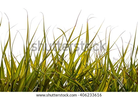 Palm tree leaves as a grass isolated on white - stock photo