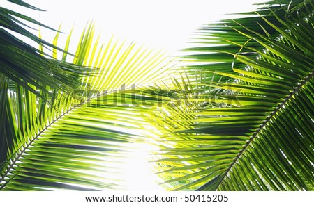 Palm tree leaves in various green tones and shades - stock photo