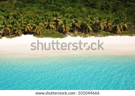 Palm tree lined beach - stock photo