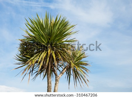 Palm tree on a blue sky background - stock photo