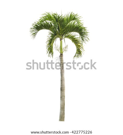 Palm tree on a white background - stock photo