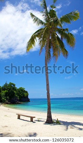 Palm tree on a white sand tropical beach on Malapascua island, Philippines
