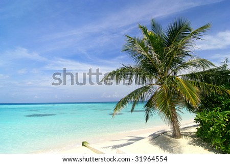 Palm Tree on an exotic beach view in Maldives