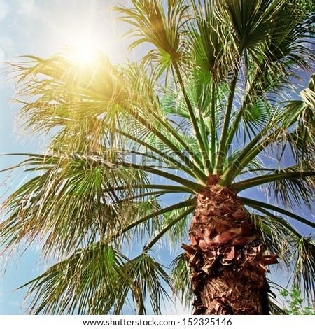 palm tree on background of blue sky - stock photo