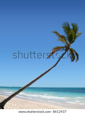 Palm Tree on Beach - stock photo