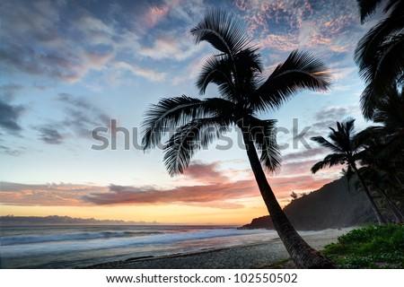 Palm tree on beach at sunset. Reunion Island - stock photo