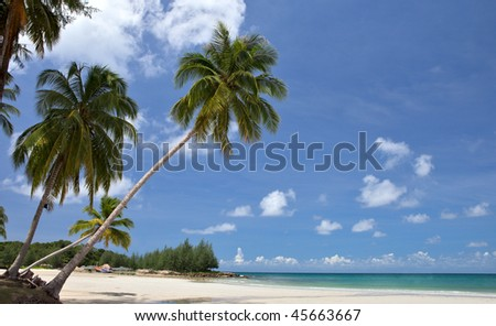 Palm Tree on Caribbean Beach