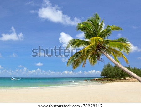 Palm tree on luxury tropical beach under blue sky