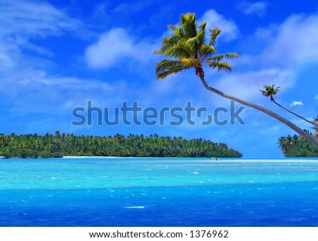 Palm Tree on One Foot Island - stock photo