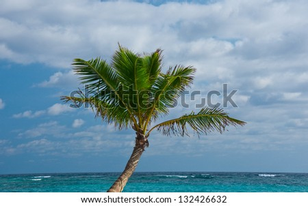 Palm Tree on the Beach, Punta Cana, Dominican Republic - stock photo