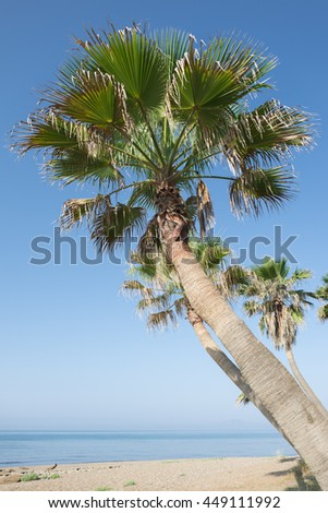 Palm tree on the beach. Sea and blue sky.
