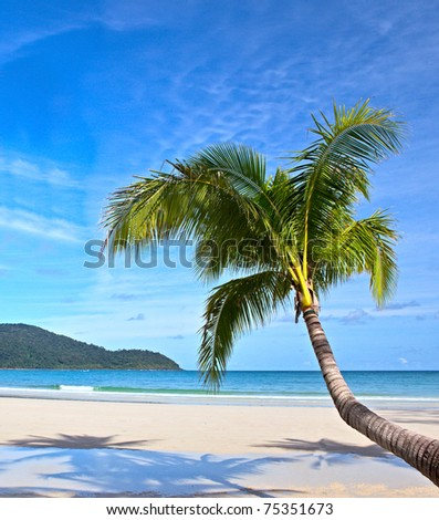 Palm tree on the beach. Summer nature landscape.