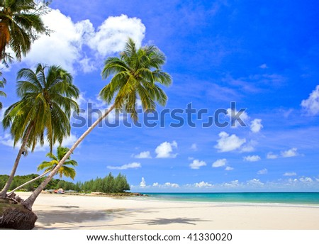 Palm tree on the beach, tropical nature