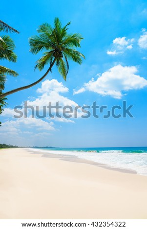 Palm tree on the long clean tropical ocean beach at sunny day
