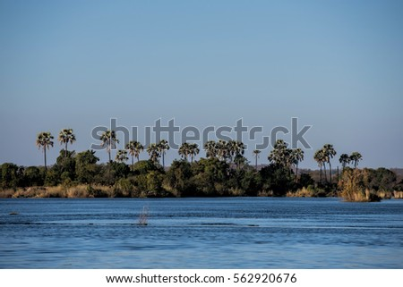 palm tree on the Zambezi