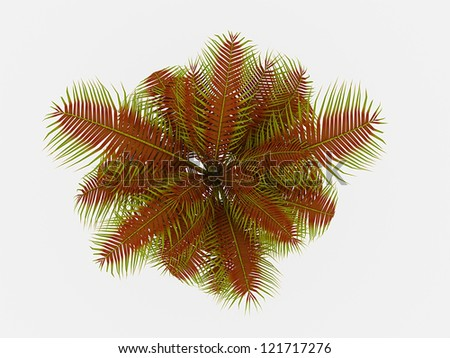 Palm tree on top isolated on white background - stock photo