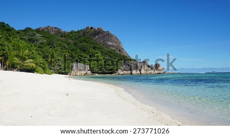 palm tree on tropical beach on the seychelles