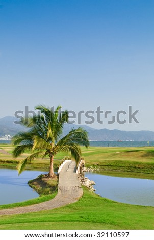 Palm tree on tropical oceanfront golf course
