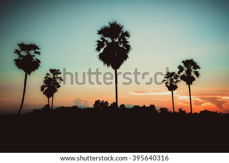 Palm tree on twilight time in Thailand