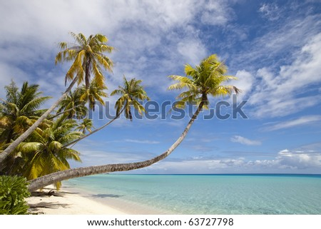 Palm tree on whit sand beach and blue lagoon in paradise island - stock photo