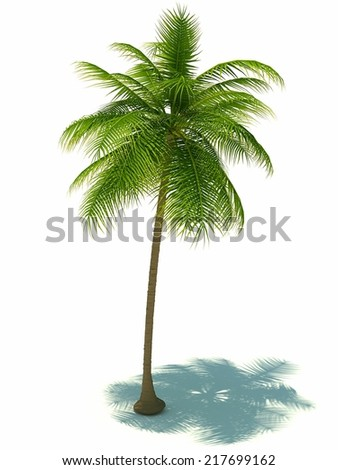 palm tree on white background.