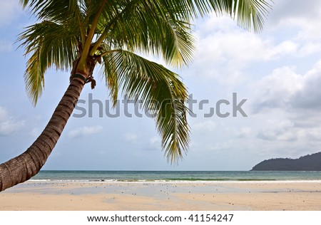 Palm tree over sea water on the tropical beach