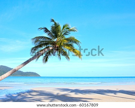 Palm tree over the sand on tropical beach - stock photo