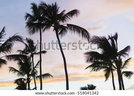 Palm Tree over Tropical Beach, Sunset Beach