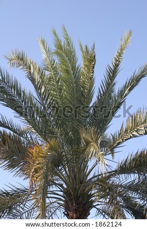Palm Tree (portrait) - stock photo