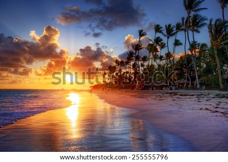 Palm tree sandy beach sunrise  - stock photo