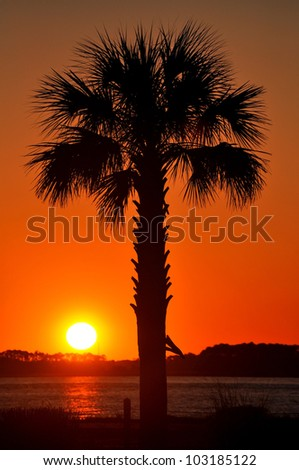 Palm tree silhouette at sunset - stock photo
