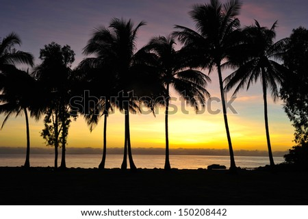 palm tree silhouettes against colorful sky at sunrise, port douglas, queensland, australia. rainbow colored tropical beach sunset island