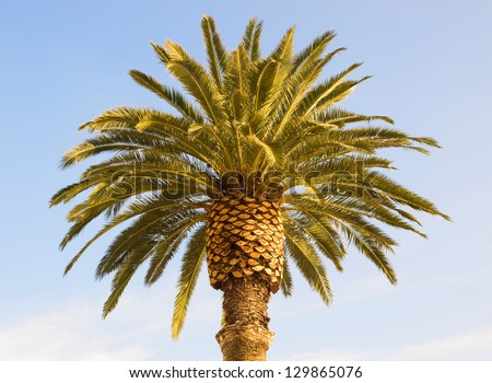 Palm tree. The photo shows the top of a palm tree - stock photo