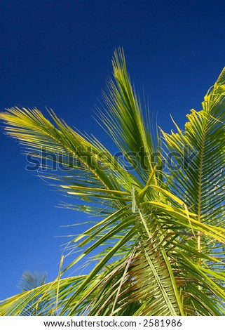 Palm tree under the cloudless tropical sky of Costa Rica - stock photo