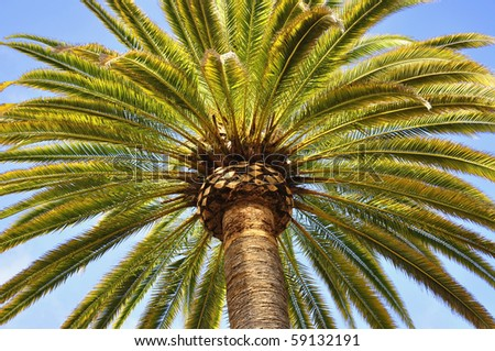 Palm tree, useful as a background pattern