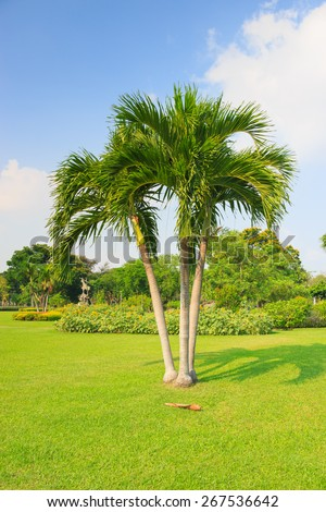 Palm tree with blue sky  - stock photo