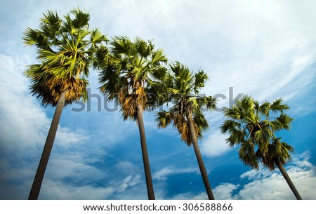 palm tree with blue sky - stock photo