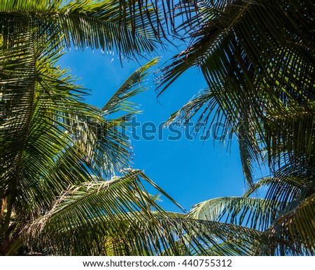 Palm tree with coconut on blue sky - stock photo