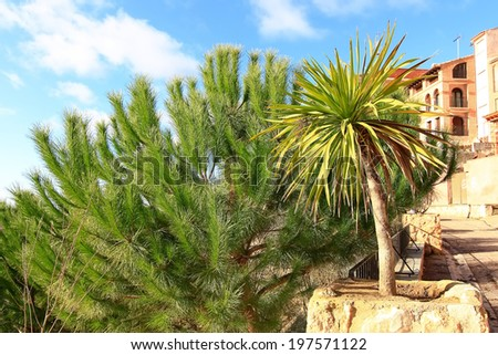 palm tree with pine trees and some buildings behind - stock photo