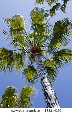 Palm tree wrapped in a checkered flag - stock photo